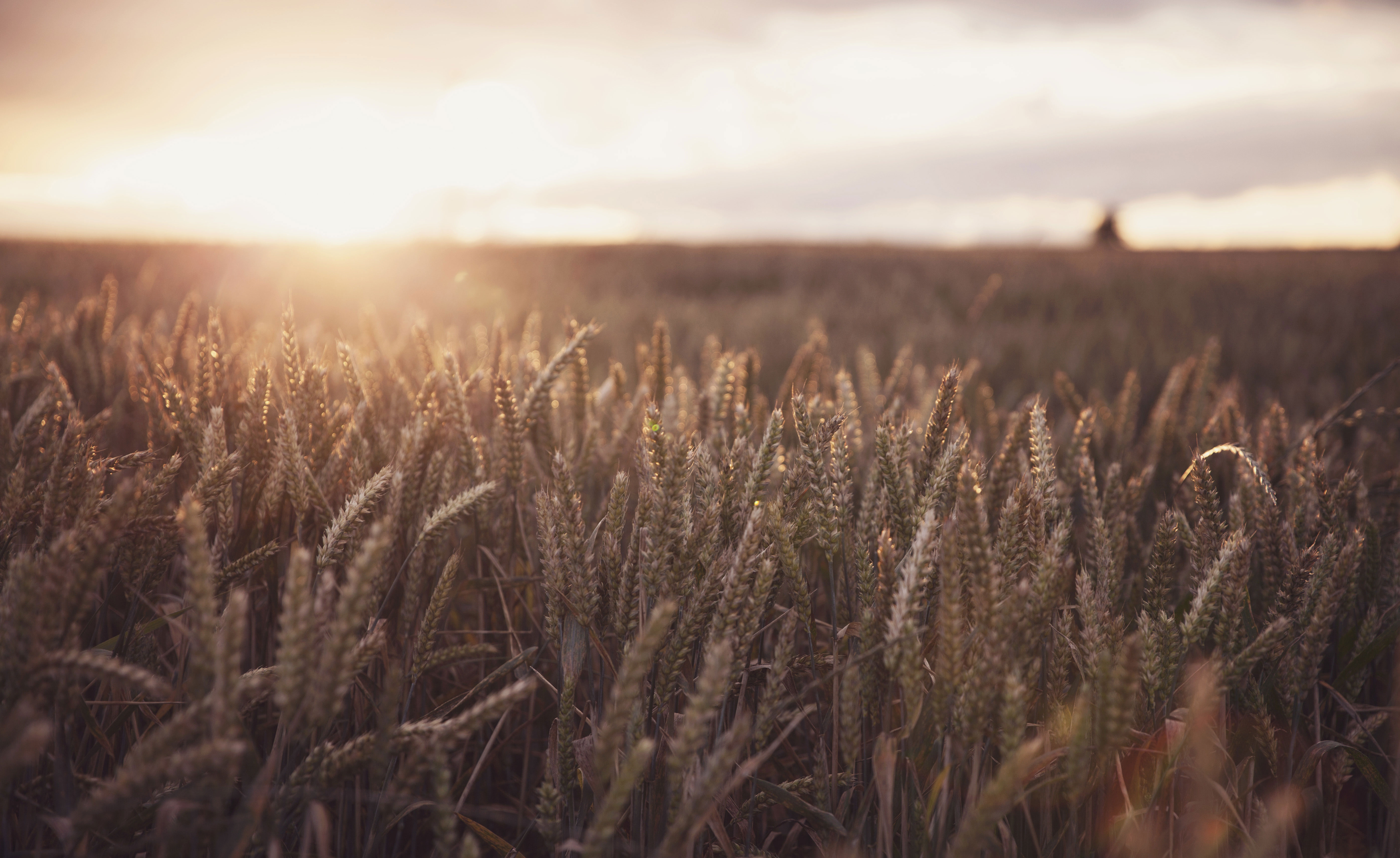 Does Your Farm Qualify for Research & Development Tax Relief?