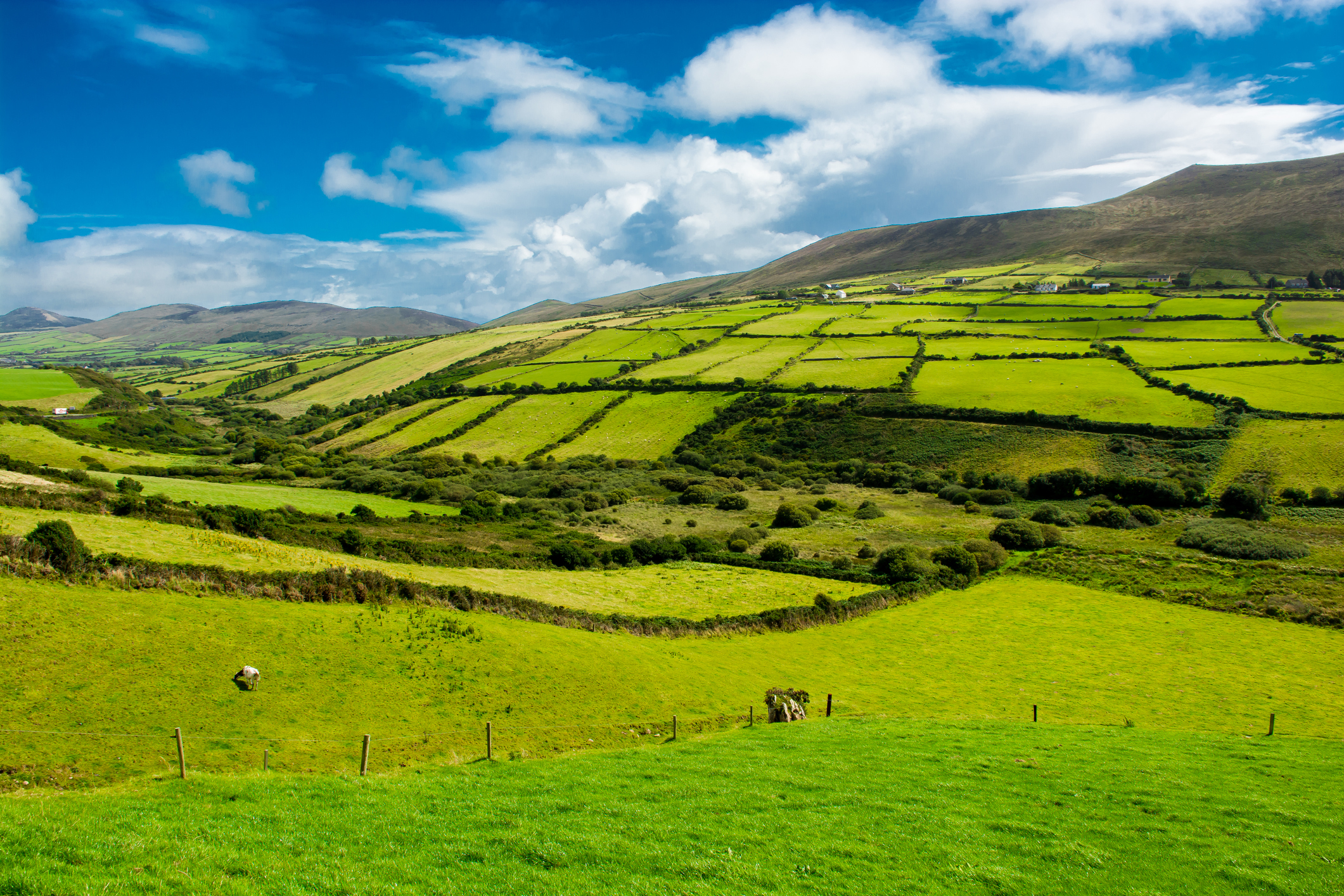 Agriculture & Rural Business Newsletter – January 2021